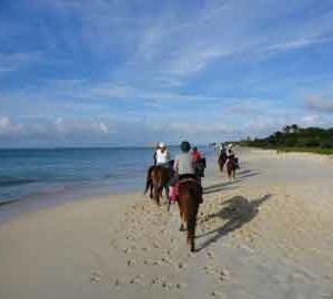 horseback riding in Jamaica